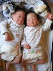 hp-zwillinge-klein